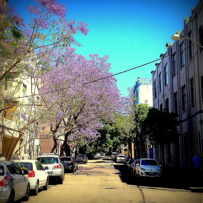 Chippendale Streetscape